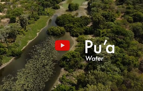 Pu'a - Water (Mapoon)